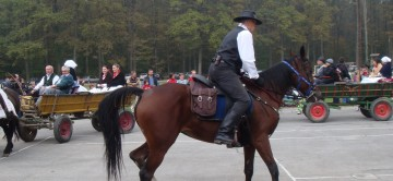 konjske zaprege