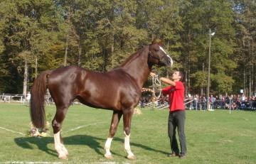 sportski konj