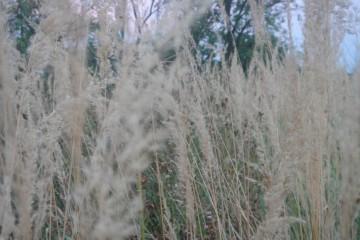 vlati trave