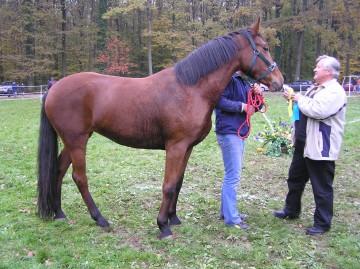 sajam konja