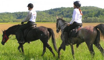 daljinsko jahanje sportski konji