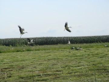 poljoprivredno zemljiste zakup