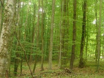 Šumarija Velika Pisanica