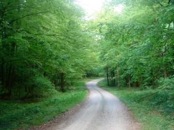 šume Pisanica
